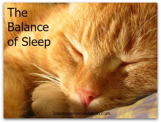 sleeping-cat-1488270
